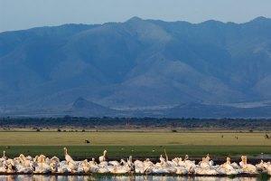 Lake Lake Manyara Safari lasting for 3 days by eastern vacations tours.