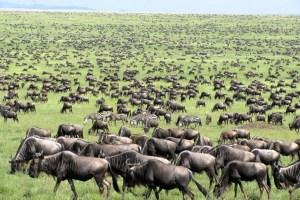 Tanzania luxury Safari - 6 Days Tarangire, Ngorongoro crater & Serengeti safari from Arusha with unique attractions
