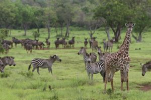 Lake Naivasha National Park - Best safari destination