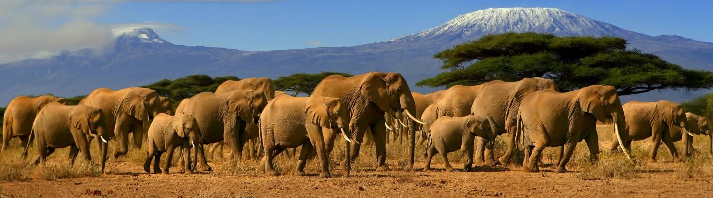Slide-Elephants-Amboseli