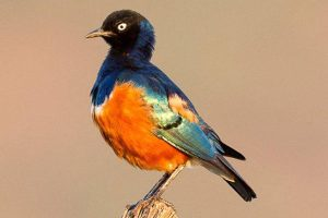Bird watching kenya safari tour on offer from Nairobi