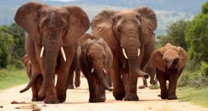 One day Tsavo East Safari