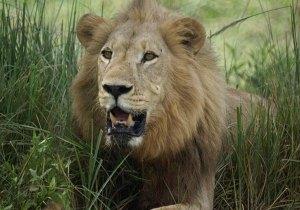 scenic safari kenya 2020 from Nairobi