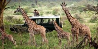 Kenya Safari holiday tours from mombasa