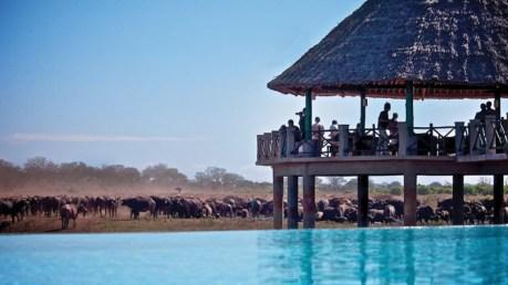 Mombasa Road Safaris - This is a nature and wildlife safari from the kenya beach resorts