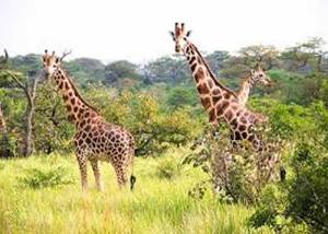 Tsavo West air Safari