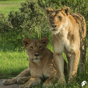 3 Days Tsavo East West safari from Mombasa