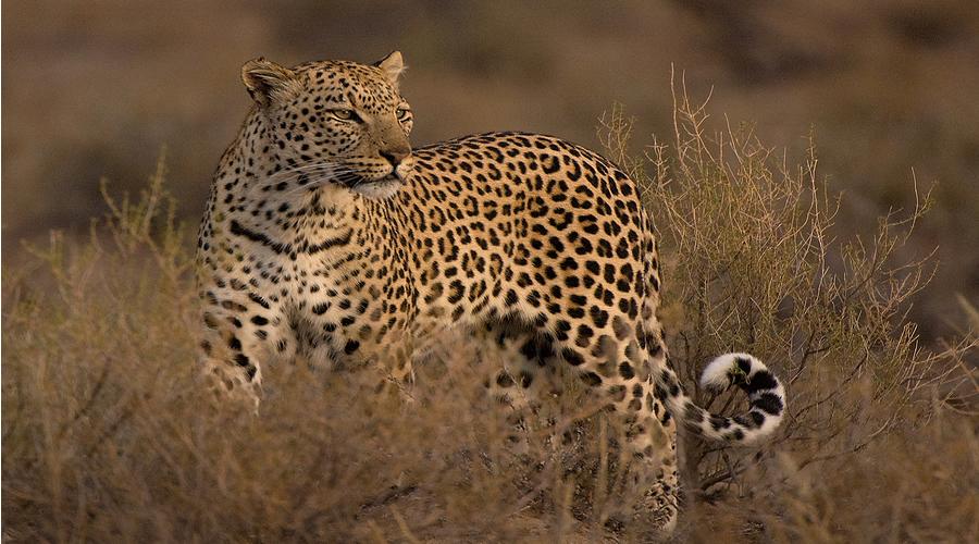 4 Days-Tsavo West-Amboseli Safari
