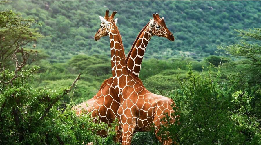 Best Kenya Family Safaris