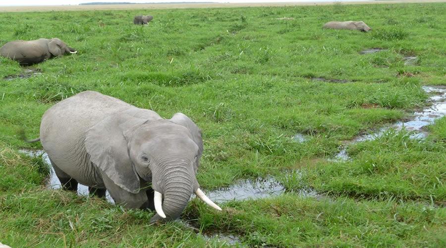Tsavo West-Amboseli Nature Safari | African safari tours Kenya