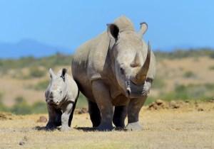One day Ol Pejeta Conservancy Safari