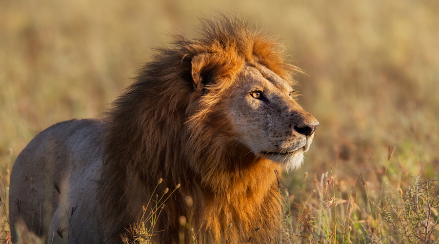 Taita Hills Amboseli Safari | African safari tours Kenya