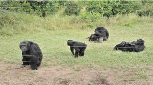 Ol Pejeta Overnight Safari