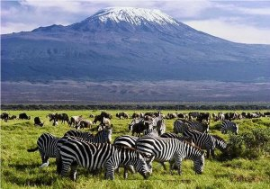 3 Days Nairobi Amboseli Tsavo East Safari