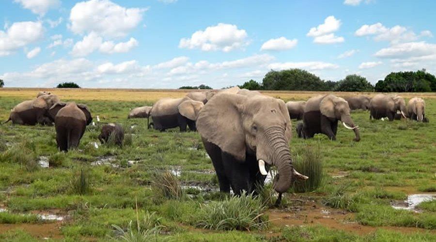 Kenya safaris from Mombasa