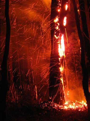 Single Burning Tree Bonang Rd 16-1-14