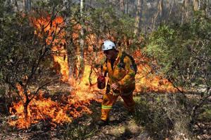 Firefighter lights a backburn Oct 21 2013 Blue Mountains