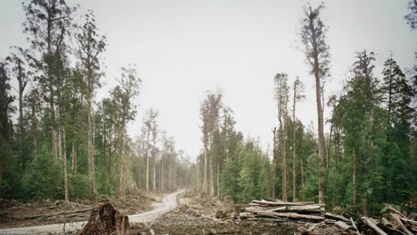 The government is insisting that burning wood waste from native forests be counted as a renewable energy source.