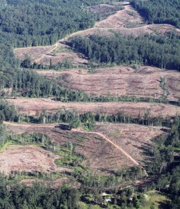 Australian Forests Becoming Commodities
