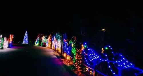 zoo holiday lights 4