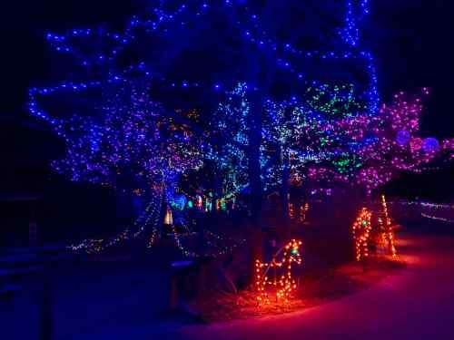 zoo holiday lights 3