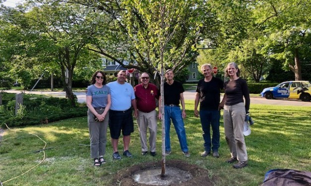 A Hearty Welcome to 8 New Trees in EG!