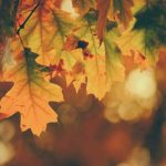 Everyone's Invited! Community Services Fall Luncheon Oct. 7