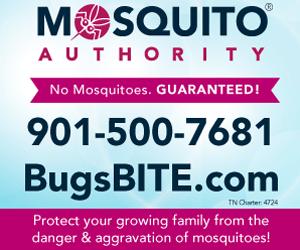 MR1- Mosquito