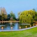Beautiful Willow tree