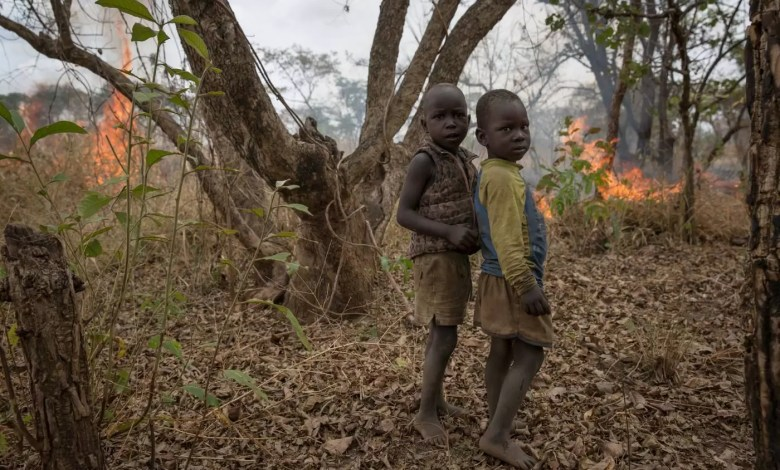 Photo of Children Who Play In Forests, Parks Have Stronger Immune Systems –New Study