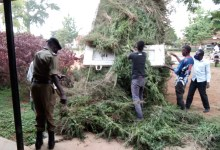 Photo of RDC Destroys 4 Hectares of NUP Supporter Marijuana