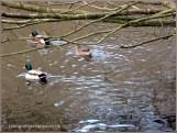 a quacking time