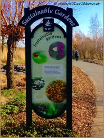 Wetlands provide sustainable garden ideas