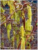 Cascading Spring time