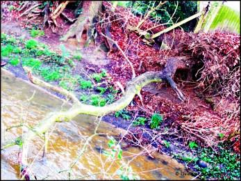 Rather fantastic fallen branch.