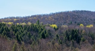 Early spring foliage pops up on Shaker Mountain Road.