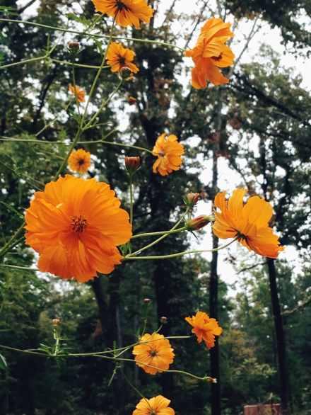 Flowers - East Texas Homestead