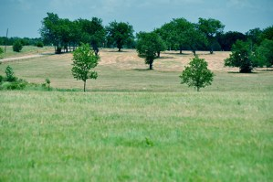 70_3-acres-hilltop-meadow-lamar-county-paris-6