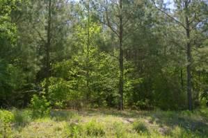 13_3_woods-winnsboro-texas