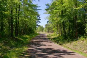 24.3-east-texas-piney-woods-path-small
