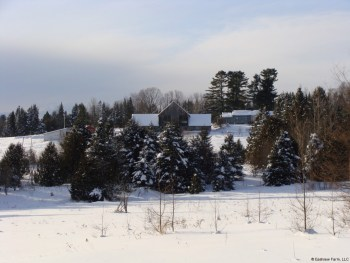 Winter view of the farm buildings from the back field.
