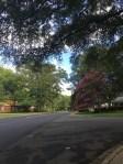 Roanoke Ave
