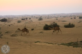 Desert Safari - UAE
