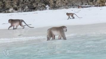 Monkey beach - Koh Phi Phi