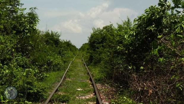 bamboo train-4