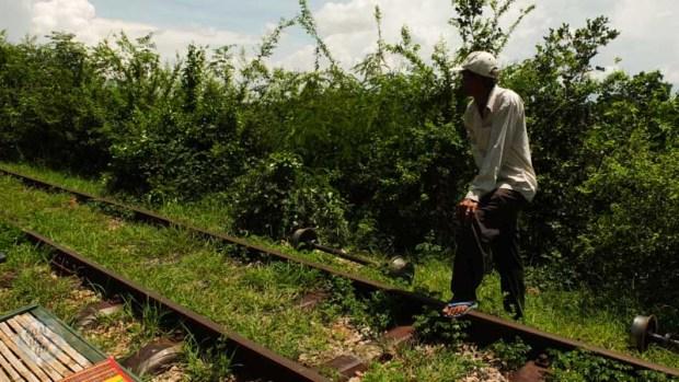 bamboo train-5