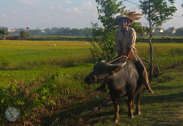 Hoi An - Danang - My Son-73