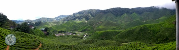 Cameron Highlands-22