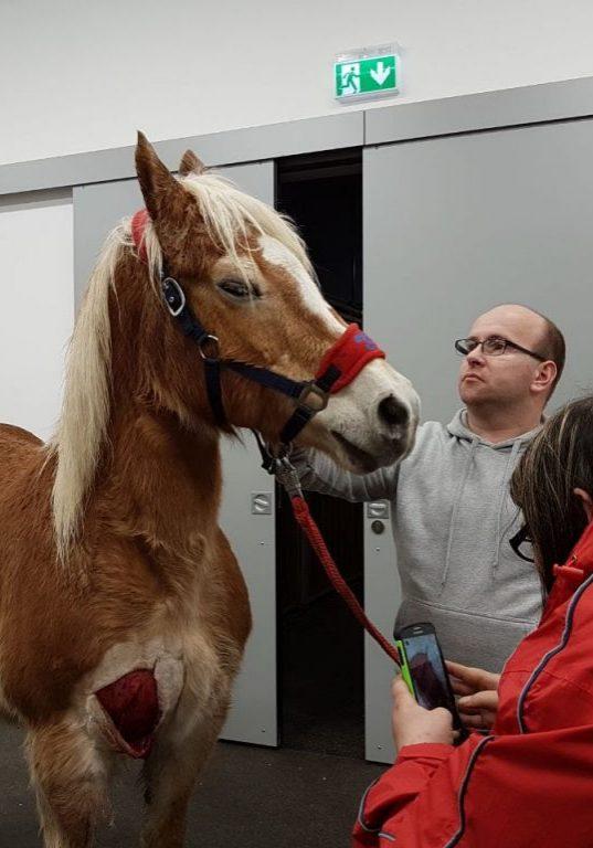 EASYVet 24/7-Notfalltransporte Pferd