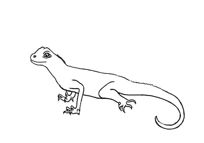 How To Draw A Lizard Step By Step Easy Animals 2 Draw